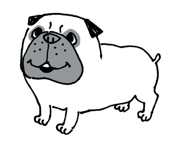 犬の美容室windy