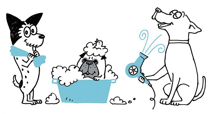 恩納村ペットサロン トリミングの犬の美容室Windy